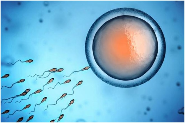 Treatment for Male Infertility