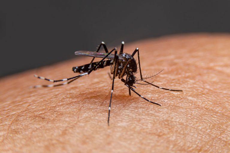 Dengue Fever – Symptoms, Causes, and Treatments