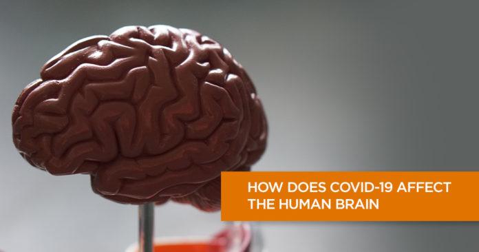 COVID-19 affect the Human Brain