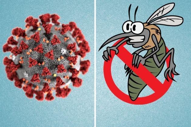 COVID-19 and Malaria